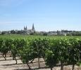 Loire Valley vineyards surround le Puy Notre Dame