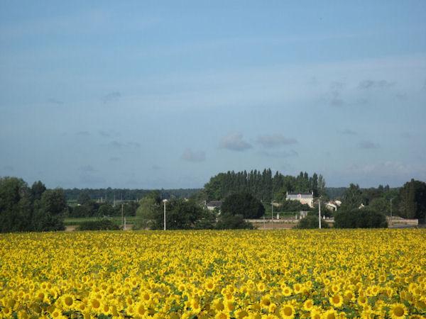 Manoir de Gourin in the distance