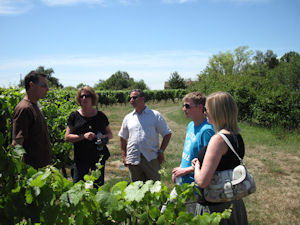 Half day wine tours Anjou vineyard